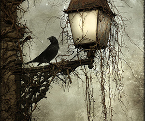 dark, crow, and black and white image