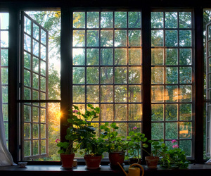 plants, window, and aesthetic image