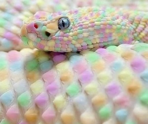snake, animal, and pastel image