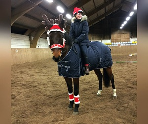 equestrian, xmas, and horse image