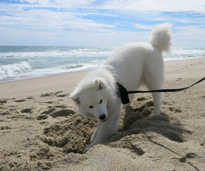 animals, dog, and ocean image