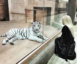 tiger, animal, and hair image