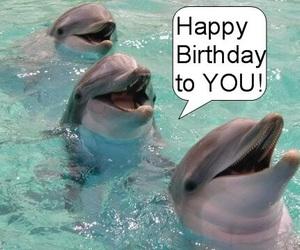 birthday, dolphin, and happy image