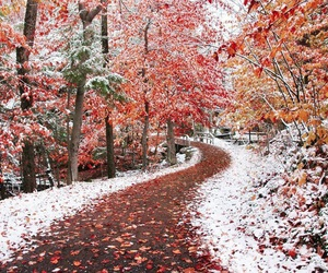 snow, tree, and autumn image