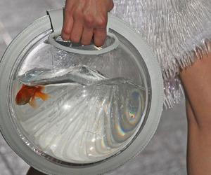 fish, fashion, and white image