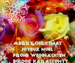 happy and merry christmas image