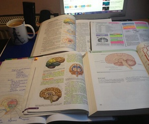 medicin, exam, and study image