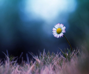 flower, photography, and pretty image