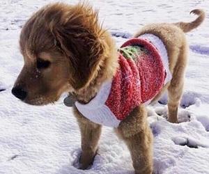 winter, animal, and christmas image