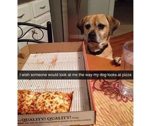 funny, pizza, and dog image