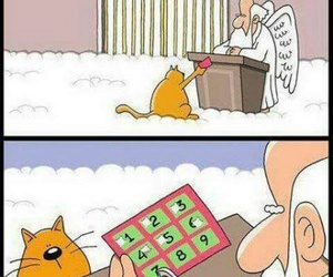 cat, funny, and heaven image