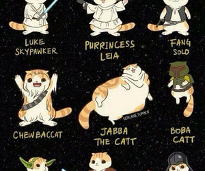 cat, star wars, and funny image