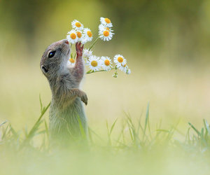flowers, animal, and nature image