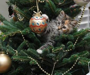 christmas, cat, and pet image