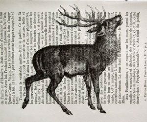 book, art, and deer image