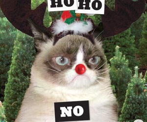 christmas, cat, and funny image