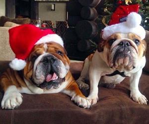 christmas, coco, and dogs image