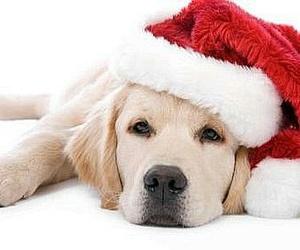 natale cucciolo cane image