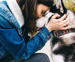 dog and friends image