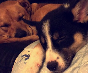 border collie, cuddle, and dogs image