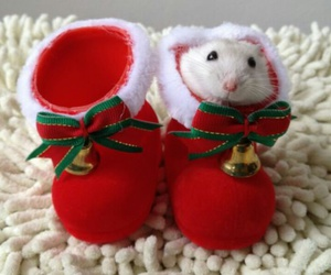 hamster, christmas, and cute image