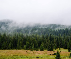 mountain and tree image