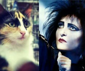 siouxsie image