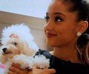 ariana grande, dog, and ari image