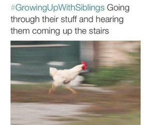 funny, siblings, and Chicken image