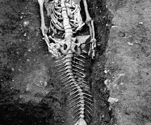 mermaid, skeleton, and bones image