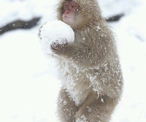 snow, monkey, and animal image