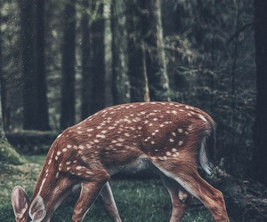 nature and vintage image