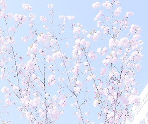 pastel, flowers, and blue image