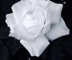 amazing, beautiful, and black and white image