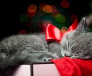 cat, kitten, and christmas image
