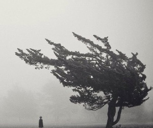 fog, photography, and nature image