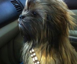 dog, chewbacca, and star wars image
