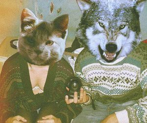 cat, wolf, and hipster image