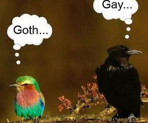 bird, funny, and goth image