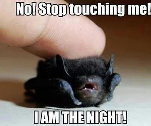 bat, funny, and night image