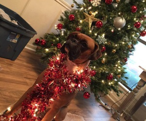 boxer, pose, and puppy image