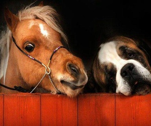 dog and horse image