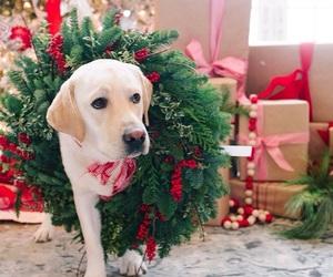 adorable, dog, and presents image