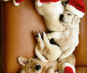 dog and puppies image