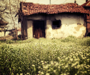 house, flowers, and photography image
