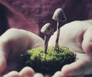 mushroom, hands, and nature image