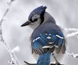 bird, winter, and blue image