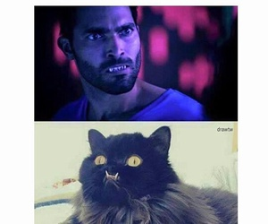 cat, teen wolf, and tyler hoechlin image