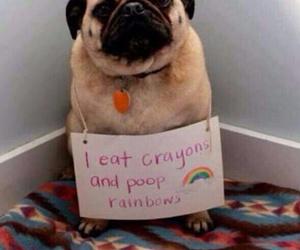 dog, rainbow, and pug image