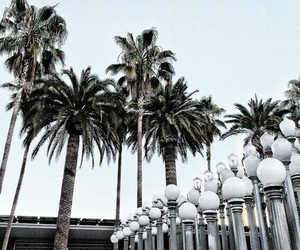 palm trees, indie, and white image